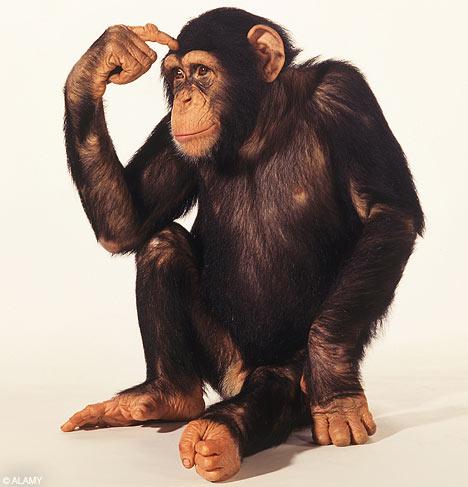 شامپانزه ها ، شباهت ها با انسان و رفتار اجتماعی